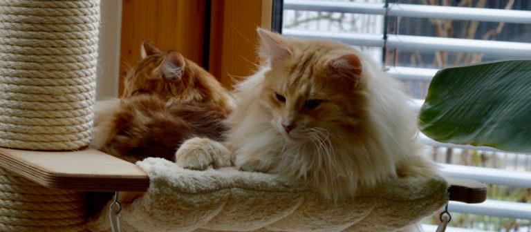 Finn und Elvy